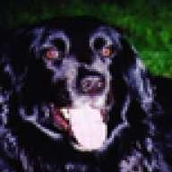 TuckerdogAVL
